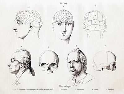 Phrenology Of Famous Heads Art Print by Paul D Stewart