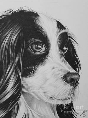 Cocker Spaniel Drawing - Phthalo by Jennifer Slack