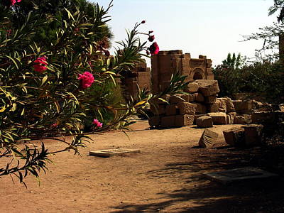 Photograph - Phylae Egypt - Flowers And Antiquity by Jacqueline M Lewis