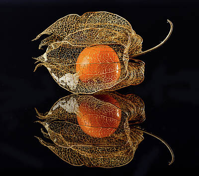 Cage Photograph - Physalis by Klaus Grosshanten