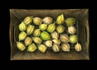 Photograph - Physalis Peruviana by Christian Slanec