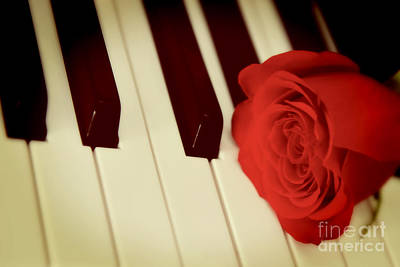 Photograph - Red Rose On Piano Keys by Olga Hamilton
