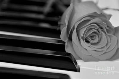Photograph - Piano Keys And Rose by Olga Hamilton