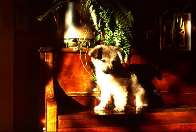 Photograph - Piano Stomping Dog by Robert  Rodvik