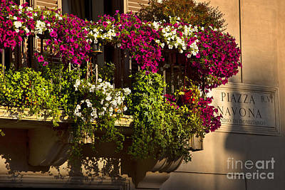 Photograph - Piazza Navona Flowers by Brian Jannsen