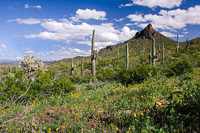 Photograph - Picacho Peak State Park by Barbara Manis