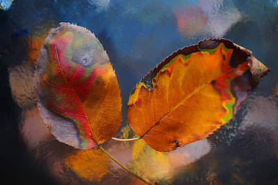 Photograph - Picasso Leaves 2014 by Beth Akerman