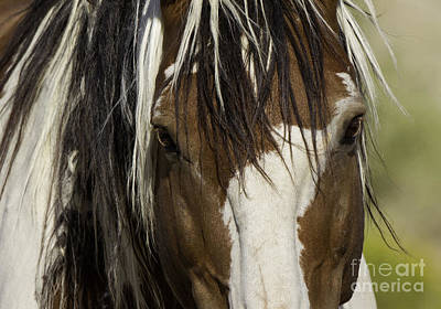 Pinto Horse Photograph - Picasso's Eyes by Carol Walker