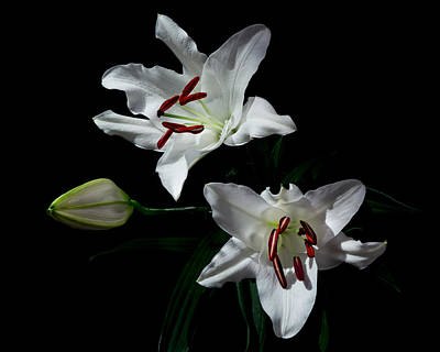 Photograph - Pick-a-lily by Paul Indigo