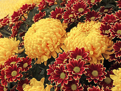 Photograph - Pick And Mix Dahlias by Gill Billington