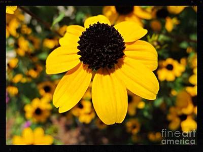 Photograph - My Darling Sunshine by Kimberlee Baxter