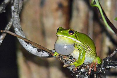 Photograph - Pick Me Pick Me Frog by David Clode
