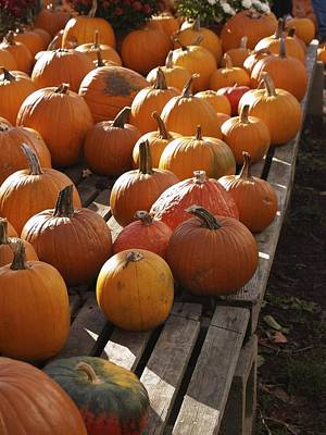 Photograph - Pick Your Pumpkin by Patricia McKay