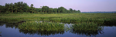 Poconos Photograph - Pickerelweed In A Lake, Long Pond by Panoramic Images