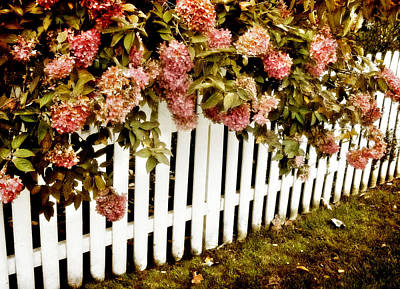 Picket Fence Flowers Photograph - Picket Fence by Jessica Jenney