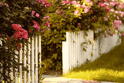 Picket Fence Flowers Photograph - Picket Fence Roses by Jessica Jenney