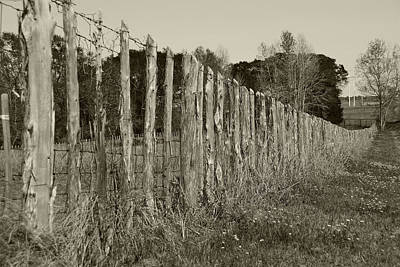 Photograph - Picket Fence Row by Charles Beeler