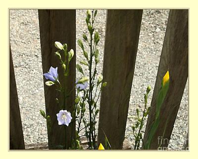 Digital Art - Picket Fence by Victoria Harrington