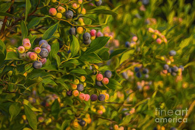 Pickin Blueberries Art Print