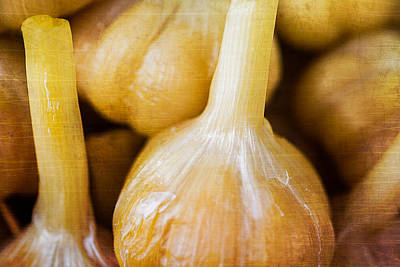 Pickled White Garlic - 2 Art Print by Alexander Senin