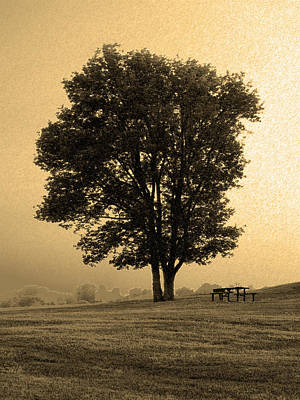 Photograph - Picnic Under The Tree by Steven Loyd