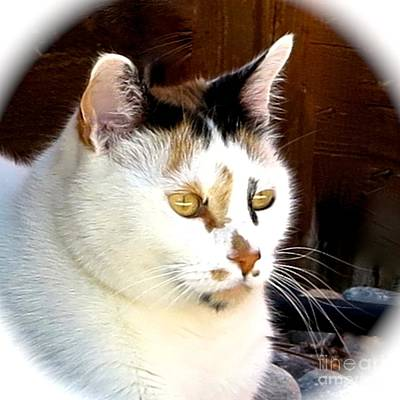 Of Calico Cats Photograph - Pico Dreaming In Nevada by Phyllis Kaltenbach