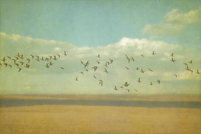 Pictorialism Photograph - Pictorialism Style Of A Flock Of Geese by Roberta Murray