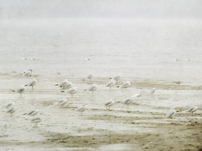 Pictorialism Photograph - Pictorialist Style Of Seagulls Gathered by Roberta Murray