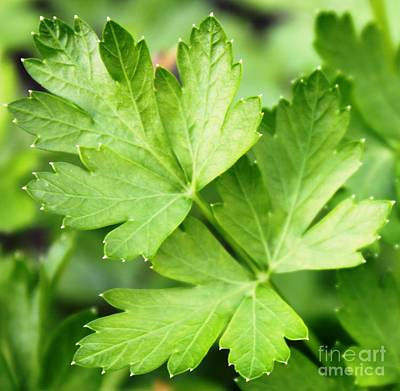 Picture Perfect Parsley Art Print by French Toast