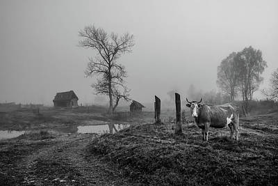 Cow Wall Art - Photograph - Pictures From The Village. by Lyubov Furs