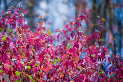 Picturesque Autumn - Featured 3 Art Print by Alexander Senin