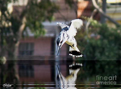 Kingfisher Digital Art - Pied Kingfisher by Irfan Gillani