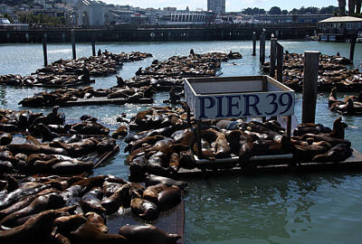 Photograph - Pier 39 San Francisco Bay by Aidan Moran