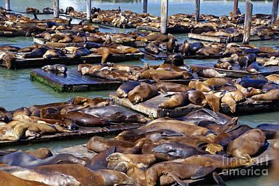 Photograph - Pier 39 Sea Lions by Rod Jones