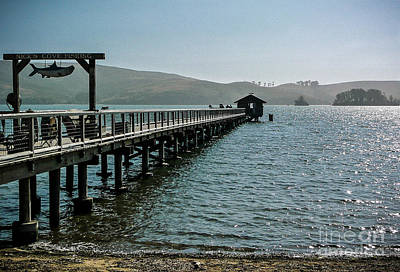 Photograph - Pier At Nick's Cove by Amy Fearn