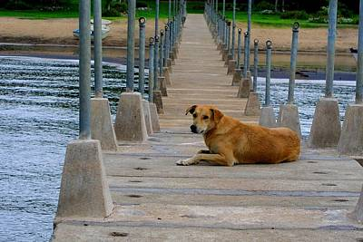 Photograph - Pier Pup by Robert Watson