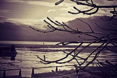 Pier Thru The Tree Art Print by Dawdy Imagery