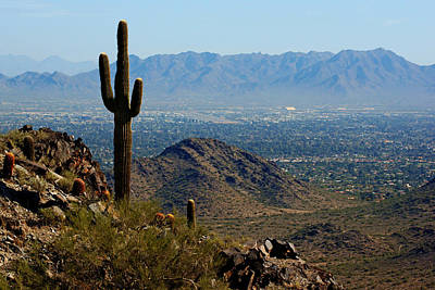 Photograph - Piestewa Peak Cactus View by Daniel Woodrum