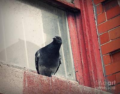 Photograph - Pigeon 2 by Sarah Loft