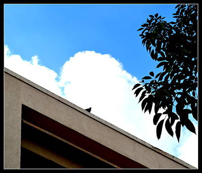 Photograph - Pigeon And Sky-2 by Anand Swaroop Manchiraju