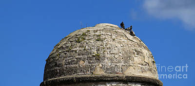 Photograph - Pigeon Dome by Mary Haber