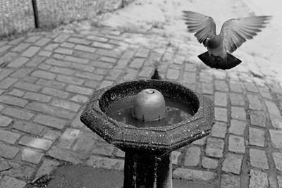 Photograph - Pigeon Fountain by Dave Beckerman