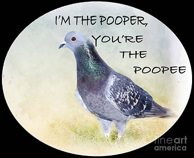 Pigeon Digital Art - Pigeon Humor #2 by Betty LaRue