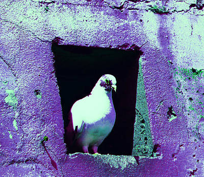 Photograph - Pigeon In Warehouse 2 by Laurie Tsemak