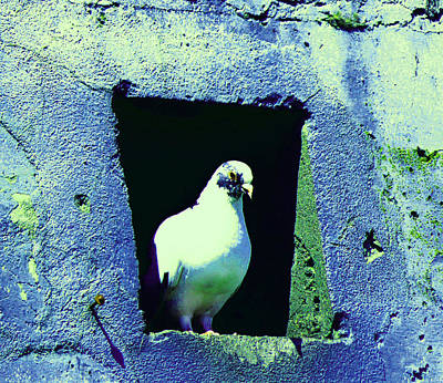 Photograph - Pigeon In Warehouse 3 by Laurie Tsemak