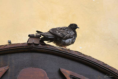 Photograph - Pigeon On Archway by Diana Haronis