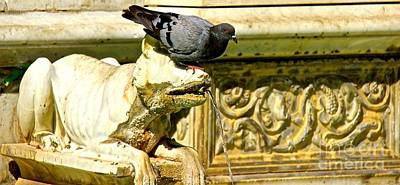 Photograph - Pigeon On Statue by David Warrington