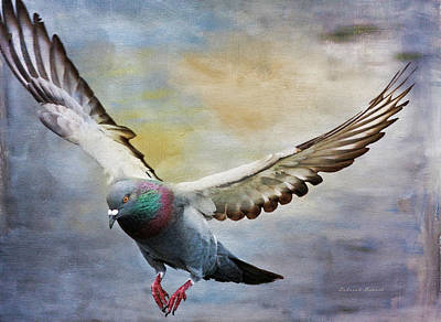 Pigeon Photograph - Pigeon On Wing by Deborah Benoit