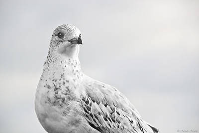 Photograph - Pigeon Pride II by Nicola Nobile