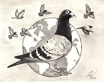 Drawing - Pigeon Race by Omoro Rahim